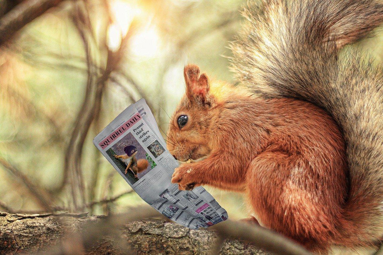 squirrel, rodent, newspaper-6374731.jpg